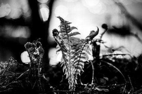 Lohikäärmeiden aamu – Arising Dragons