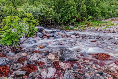 Strem running down to a fjord -Tunturipuro laskee vuonoon