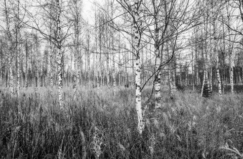 The White ones – Valkoiset