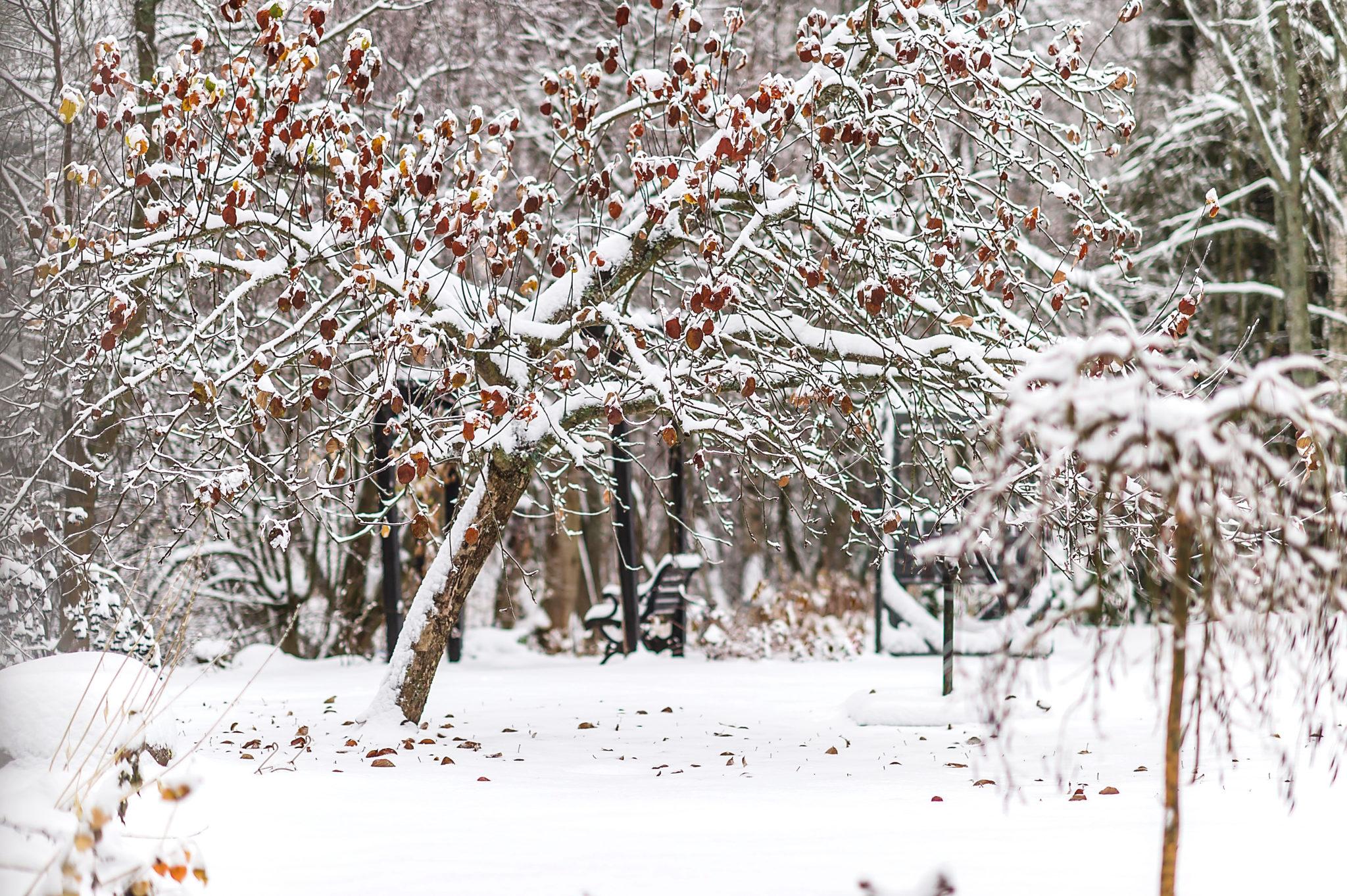 Ei vielä talvi – It´s not yet time for Winter