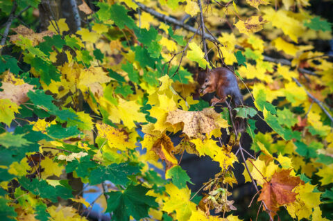 Autumn Leaves #3 – The most Beautiful Place for Lunch Break!