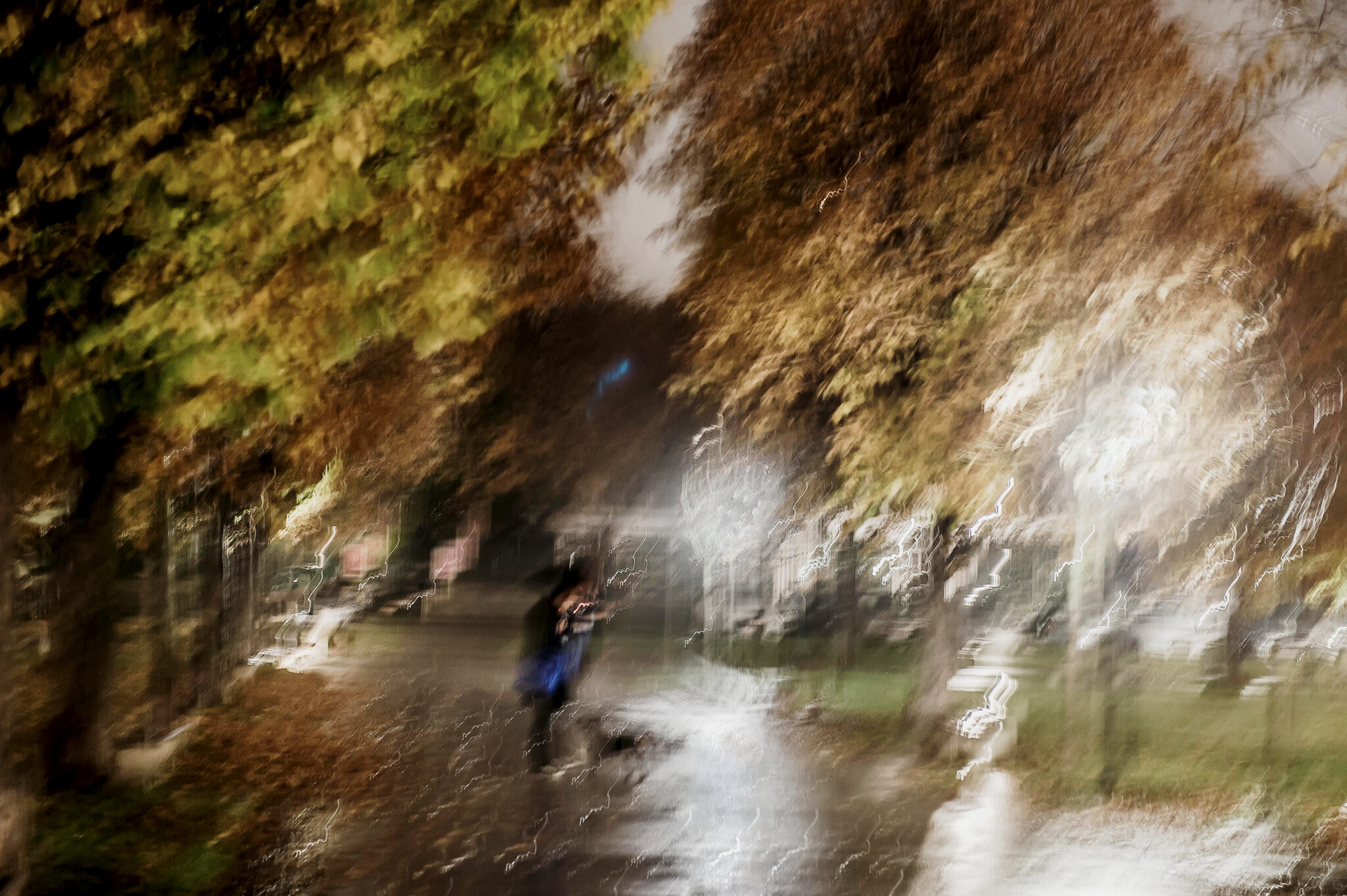 """It is Raining Cats and Dogs"" – Autumn feelings Vienna 2014"