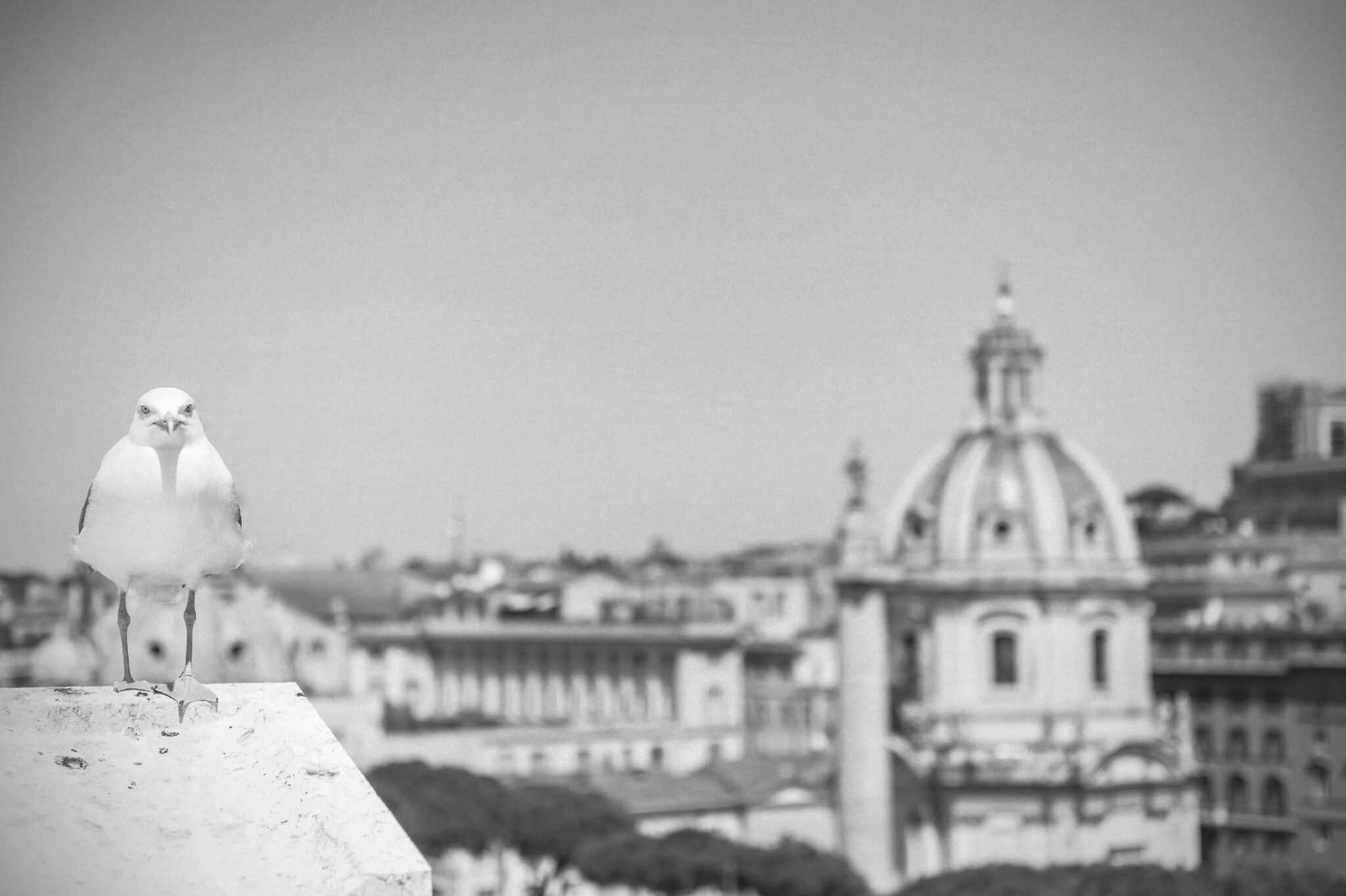 One Day the Seagull was there – Rome 2015