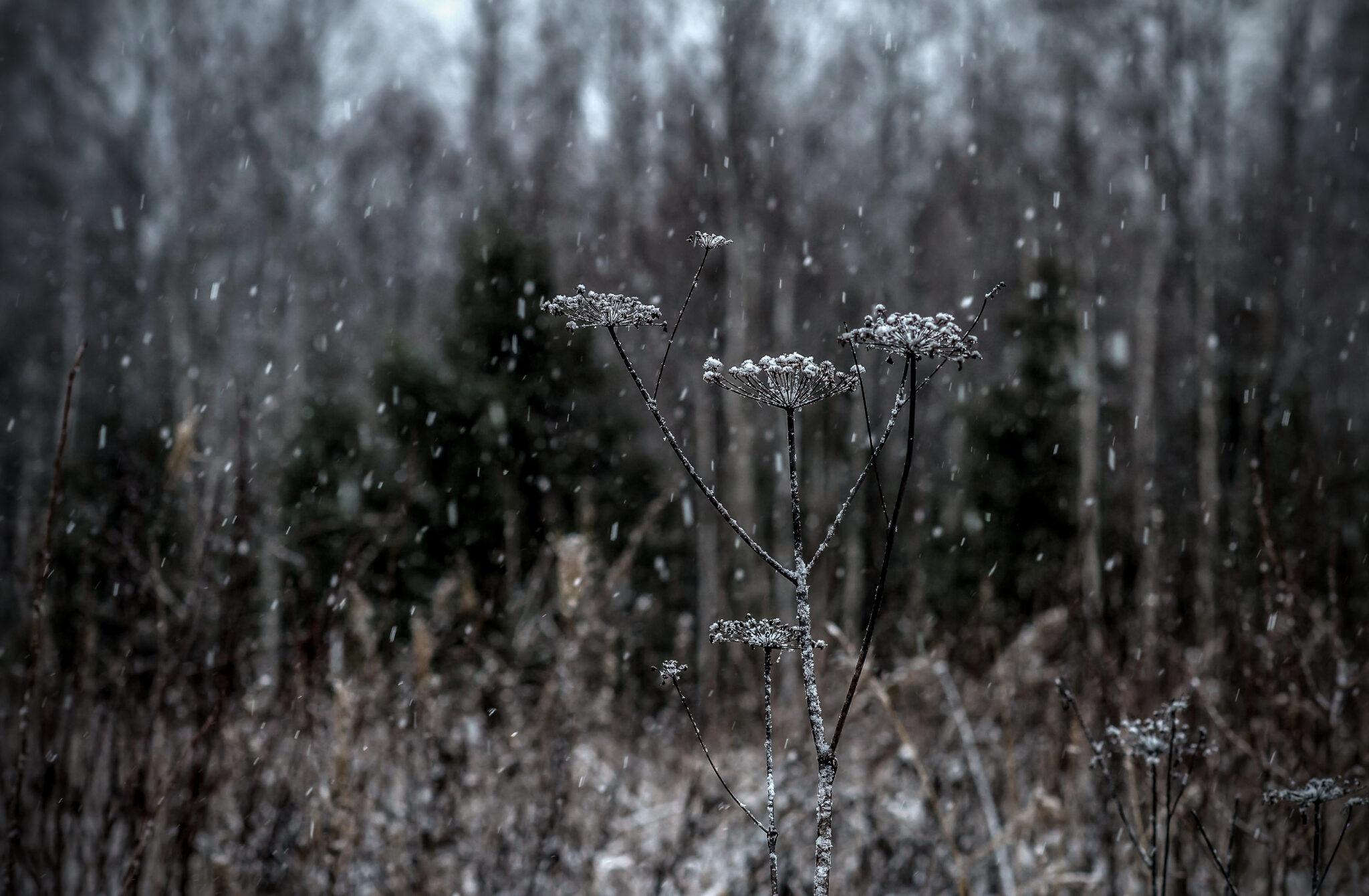 Torso and thin Snowfall
