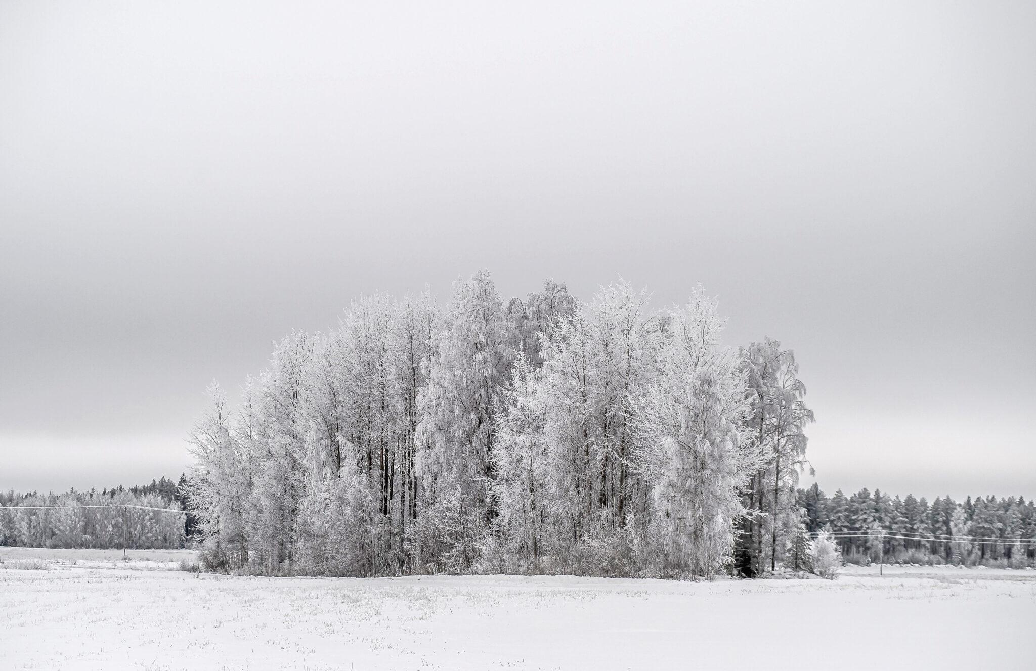 Winter Isle