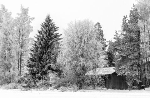 Some Trees and One Barn – Winter Wonderland